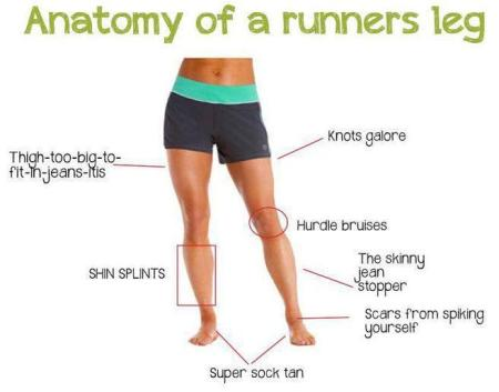 anatomy-runner-leg