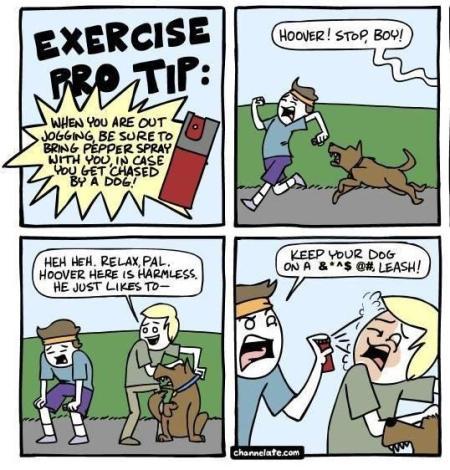 dog-safety